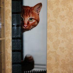 """Дверь-купе """"котэ"""""""