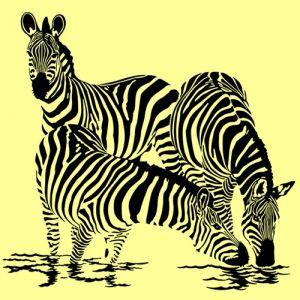 Zebra V 9