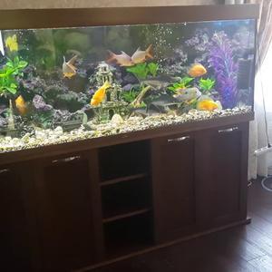 Тумба под аквариум, шпон Ясеня